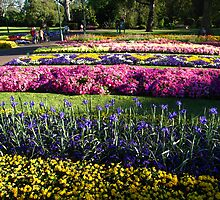 Many single colored garden beds, Toowoomba Flower Festival, Qld. Australia by Marilyn Baldey