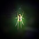 Spider in the Spotlight by Rebecca Silverman