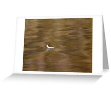 The Floating Feather Greeting Card