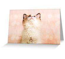A Kittens Prayer Greeting Card