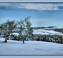 Tavistock Snow by sasraku