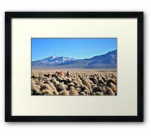 Grazing on volcanic plains Framed Print