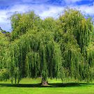 Willow - Port Arthur Prison by bidkev