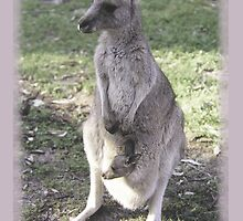 rock wallaby and joey by Phoenix-Appeal