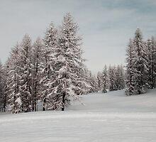 Winter scene by Steve plowman