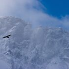 Bird of Prey in the Mist, La Grave, The French Alps by Elizabeth Turner