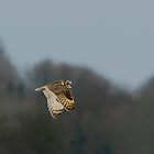 Short eared owl 4 by Ashley Beolens