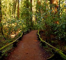 Redwood Trail 1 by Bob Moore