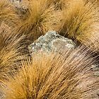 tussock by Anne Scantlebury