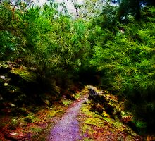 Hidden Path by Evita