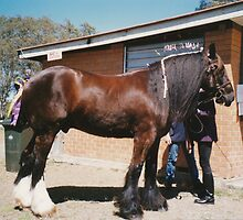Monty - Shire Horse by louisegreen