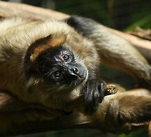 Black-Handed Spider Monkey by Margot Kiesskalt