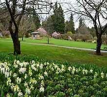 Spring  Butchart Garden in Victoria, BC, Canada by naturematters