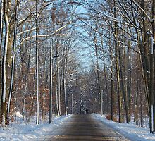Road in Moritzburg, Saxony by Senthil Nath G T