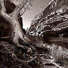 Hammersley Gorge by bettyb