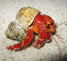 Hermit Crab by Scott Rowling
