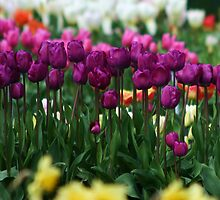Tip toe through the Tulips with me! by Martina Fagan
