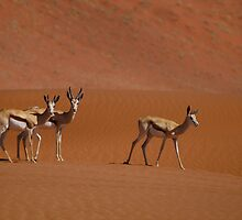 Springbok - Namibia by Lisa Germany