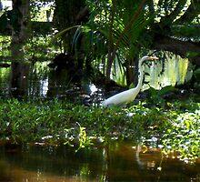 Great White Crane (Samana) by Carole Boudreau