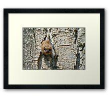 Pipistrello, Lago Chiusi, Toscana, Italia Framed Print