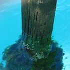 Jetty Pilon by Dawn Ostendorf