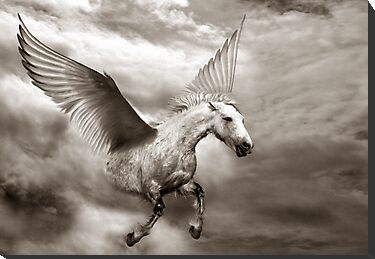 Pegasus by piscari