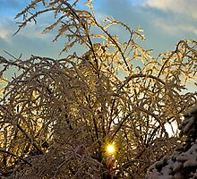 after the ice storm by lextr