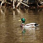 White Collar Dabbler by Debbie Oppermann