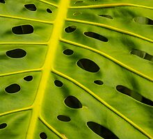 Hawaiian Monstera Deliciosa Leaf by HealthyTrekking