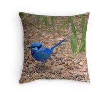 Splendid Fairy Wren Throw Pillow