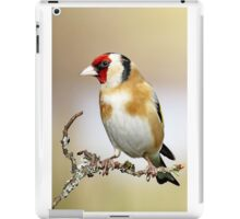 European Goldfinch - Carduelis carduelis iPad Case/Skin