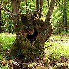 The Heart of a Tree by ienemien