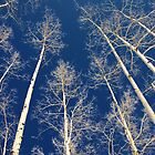 Aspen Trees 4 by TJ Zook