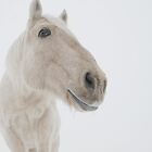 Ghost horse by Chris Jorgensen