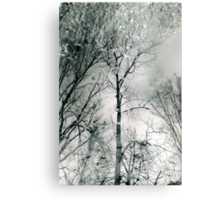 bare trees # 2 Metal Print