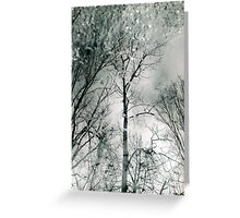 bare trees # 2 Greeting Card