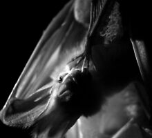 Ghost Bat by Larrikin  Photography