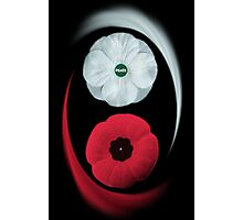 POPPIES ~ PEACE & REMEMBRANCE GO TOGETHER UNITED WE STAND PICTURE/CARD Photographic Print