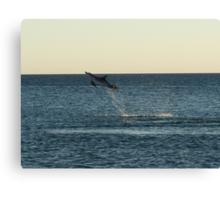 I can fly!!! Dolphin Jump Canvas Print