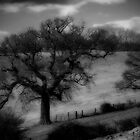 Sleepy Hollow by John Shingler