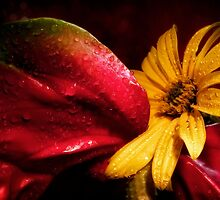 flowers by petrosyan