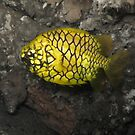 Pineapple Fish by Edjamen