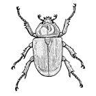 Rhinoceros Beetle by RoseAndWolf