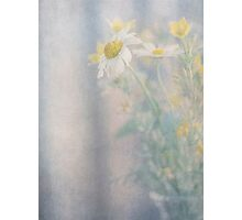 Still life of wild flowers in glass vase Photographic Print