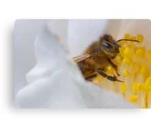 My First Bee Shot of 2015 Canvas Print