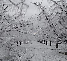 apple orchard with ice by Gale Distler