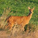 Young Doe by Fatherscud