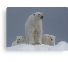 Ice Bears Canvas Print