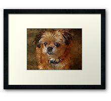 Who said I'm cute? Framed Print