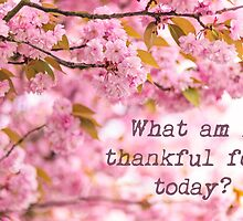 What am I thankful for today? by Zoe Power